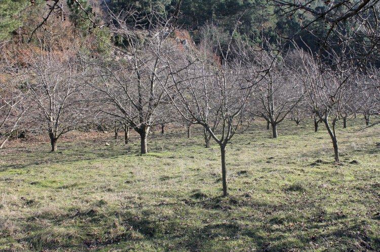 Pelos Trilhos de Portugal-Percurso do Vale do Cabrum, Resende