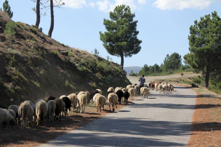 Pelos Trilhos de Portugal-Trilho da Quinta da Maúnça, Guarda