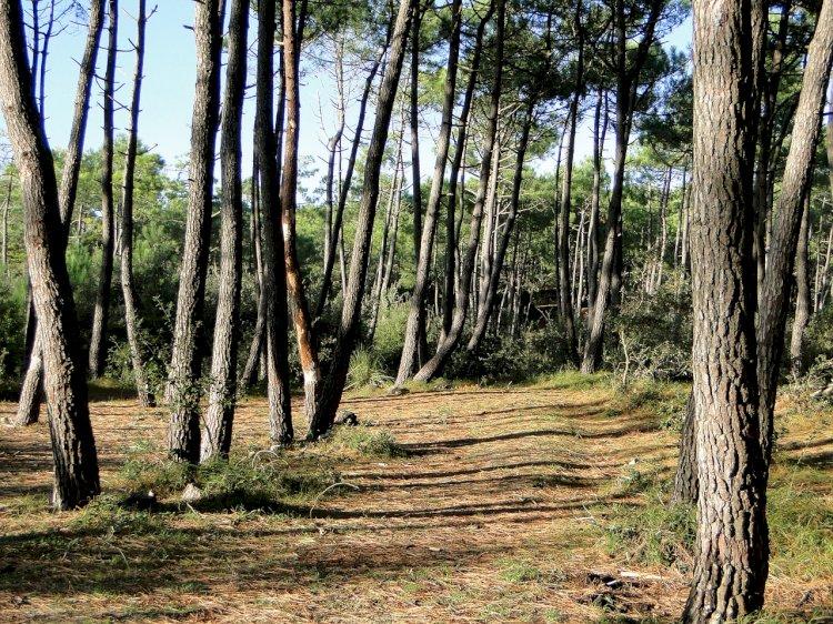 Pelos Trilhos de Portugal-Mata Nacional do Escaroupim, Salvaterra de Magos