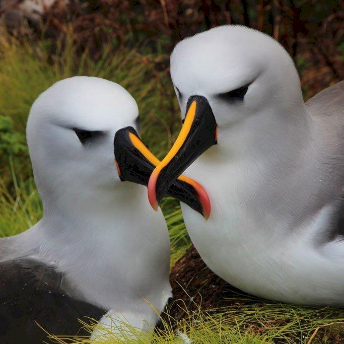 Dia Mundial do Albatroz alerta para ameaças às aves marinhas