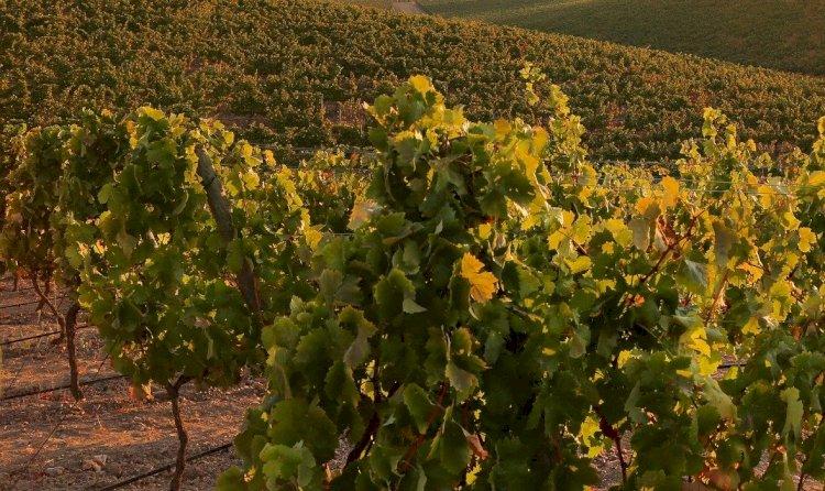 Pelos Trilhos de Portugal-Pelas Vinhas de São Cucufate, Vidigueira