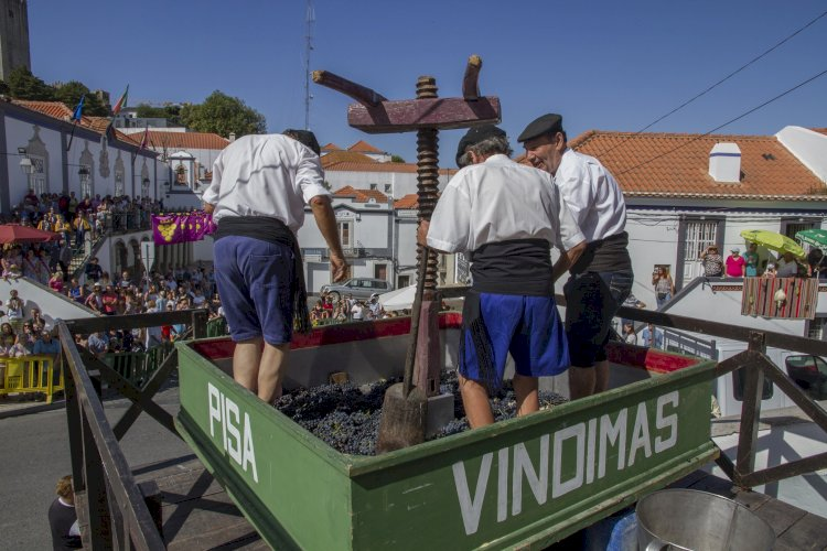 Programa Vindimas 2020 evoca festa emblemática de Palmela