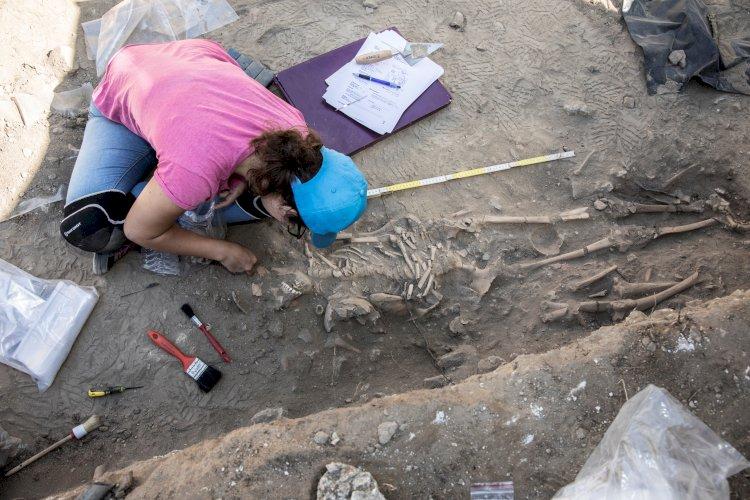 Castelo de Palmela: trabalhos arqueológicos desvendam antiga necrópole