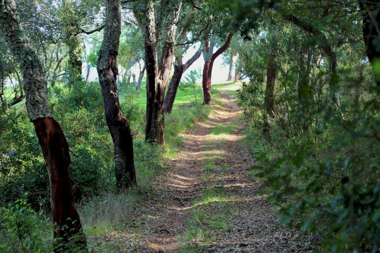 Grândola vê aprovada candidatura para valorização do Turismo de Natureza