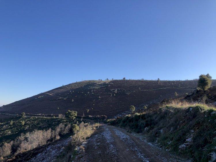 Reflorestação de sobreiros e aproveitamento de regeneração natural de carvalhos negrais na Serra do Reboredo