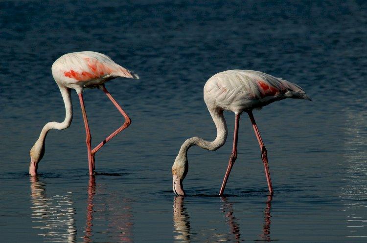 2 de Fevereiro, Dia Mundial das Zonas Húmidas