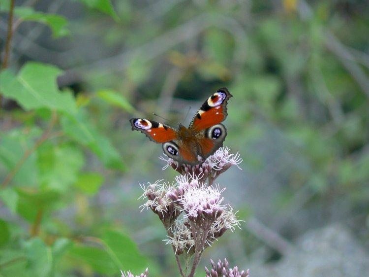 Tavira implementa a Estação da Biodiversidade de Cachopo