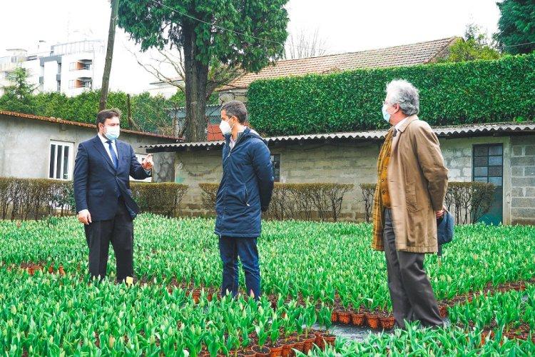 S. João da Madeira planta 70 mil tulipas