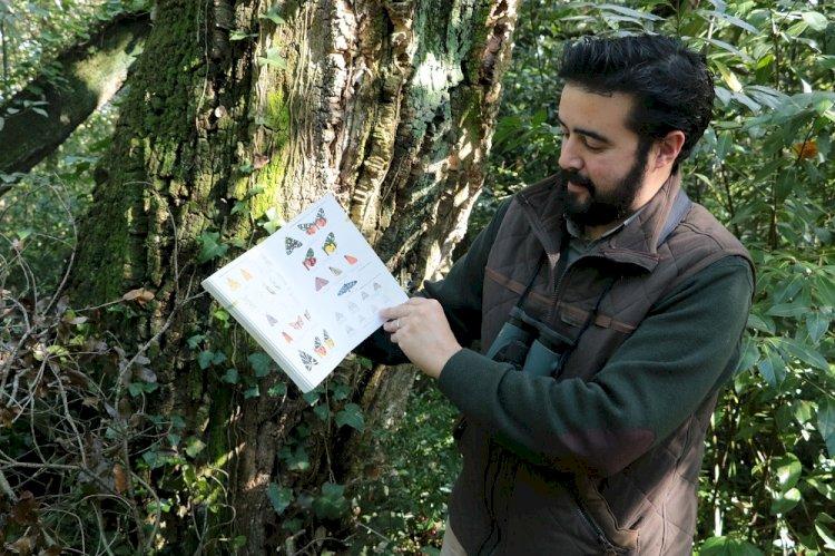 Mata Municipal do Bombarral vai ter uma estação de estudos de borboletas nocturnas