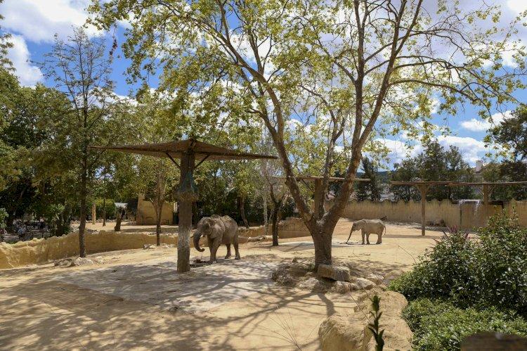 Jardim Zoológico e MEO apresentam nova instalação para o maior mamífero da savana