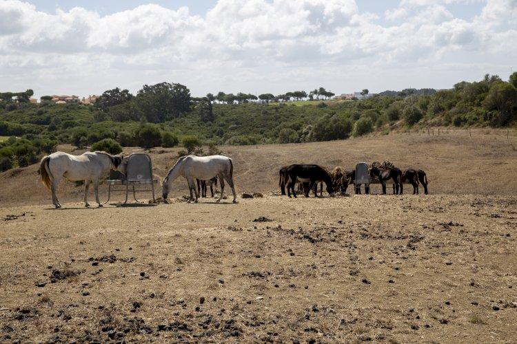 Cascais introduz Cavalos Selvagens no PNSC